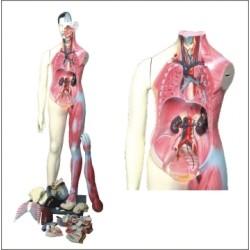 Figura Muscular Bissexual 160cm com orgãos